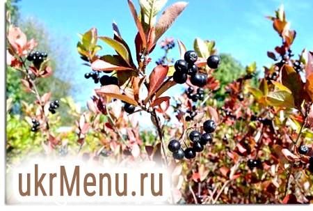 Домашнє вино з черноплодки
