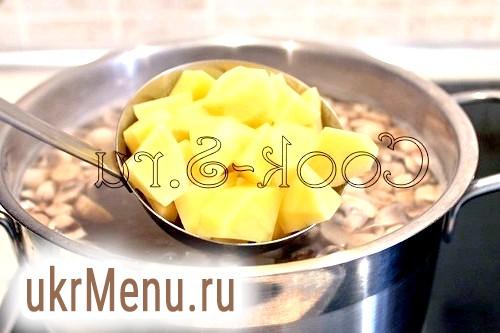 Фото - картопля