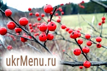 Зимові ягоди - кращий засіб від усіх хвороб!
