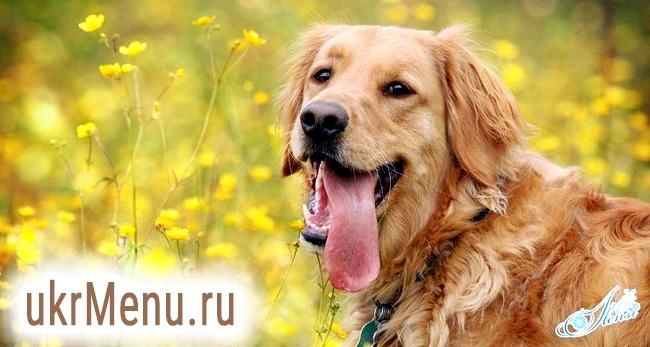 Що означає рудий собака уві сні