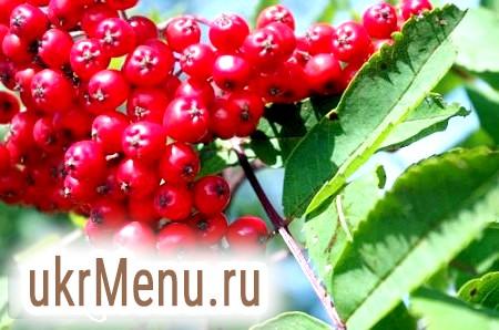 Домашнє вино з червоної горобини - рецепт з фото